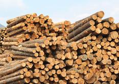 Holzgroßhandel Tirol, Holzschlägerung und Holzeinkauf