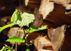 Holzhandel und Holzschlägerung in Österreich