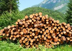 Holztransporte und Sägewerke in Österreich