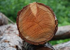 Holzgroßhandel Österreich, Zillertal, Holztransporte und Holzschlägerungen